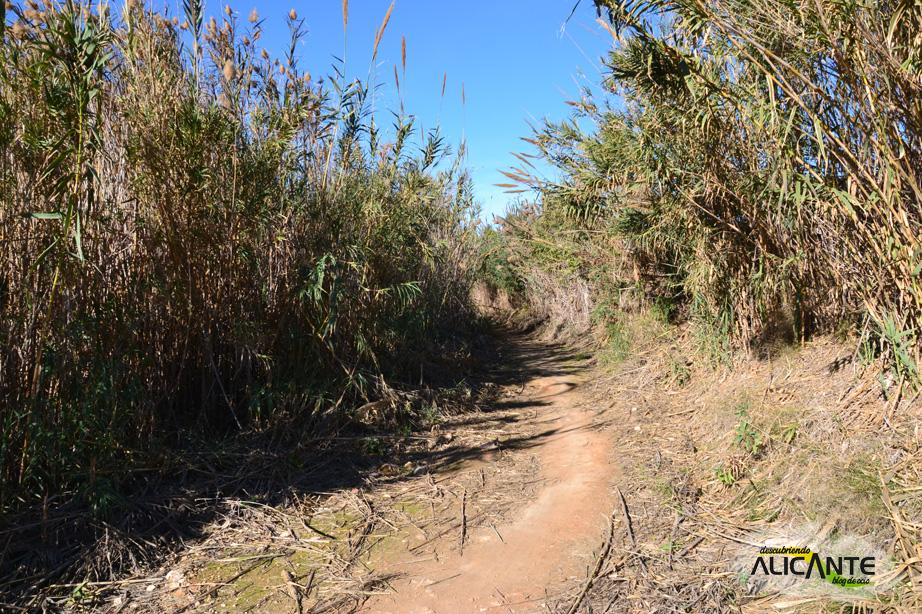 carrizales-ruta-rio-seco