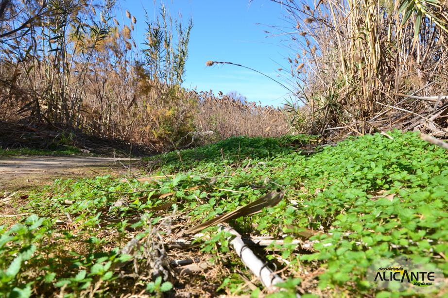 vegetacion-ruta-rio-seco