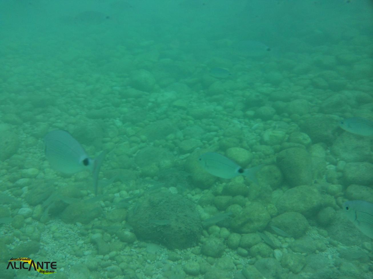 Snorkel en la Cala Raco, Calpe