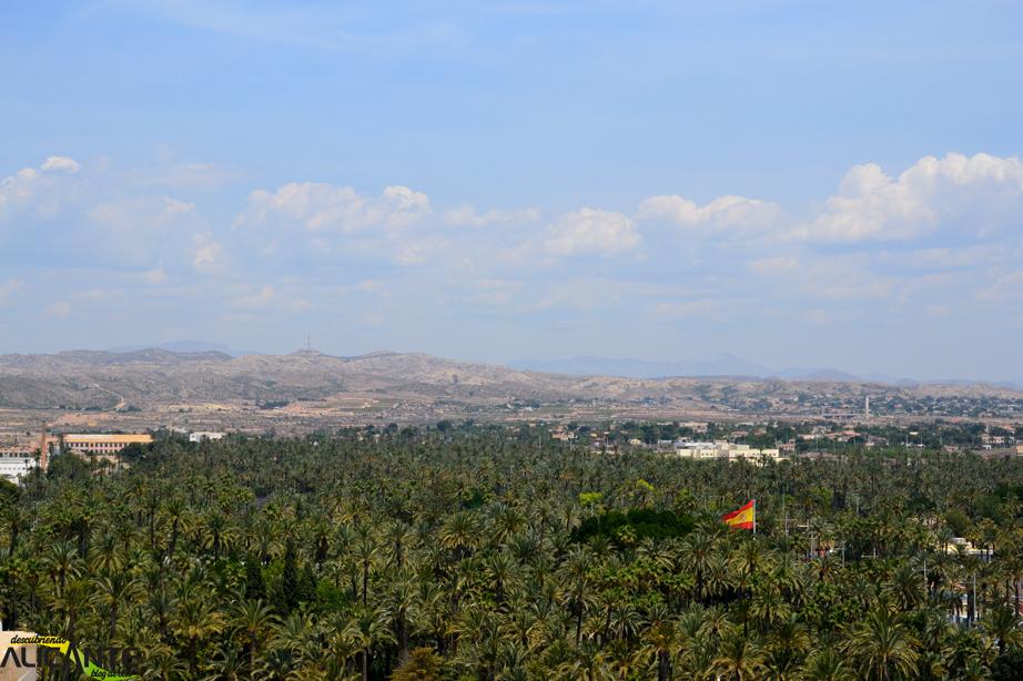 Palmeral de Elche desde la torre de Santa Maria