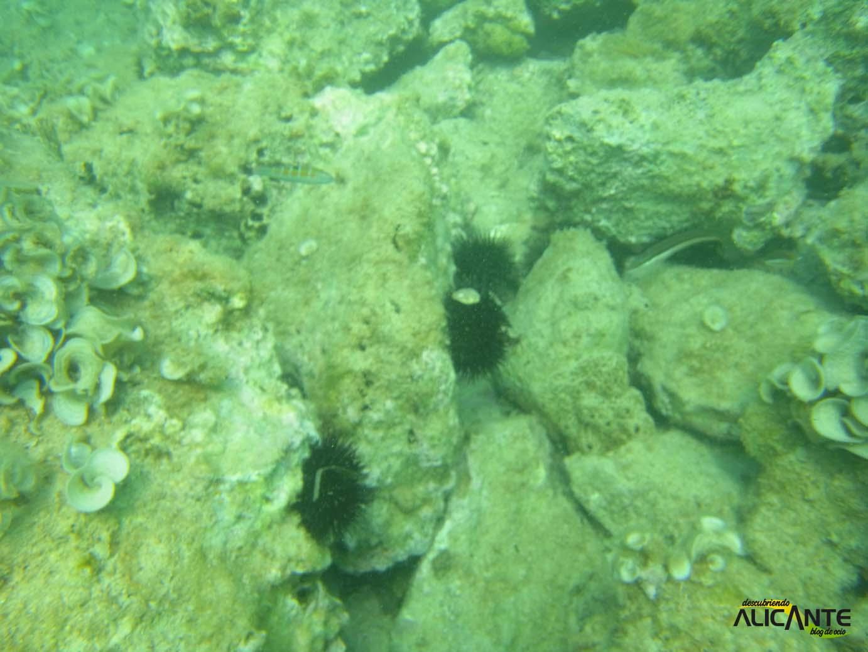 snorkel-cala-granadella-javea