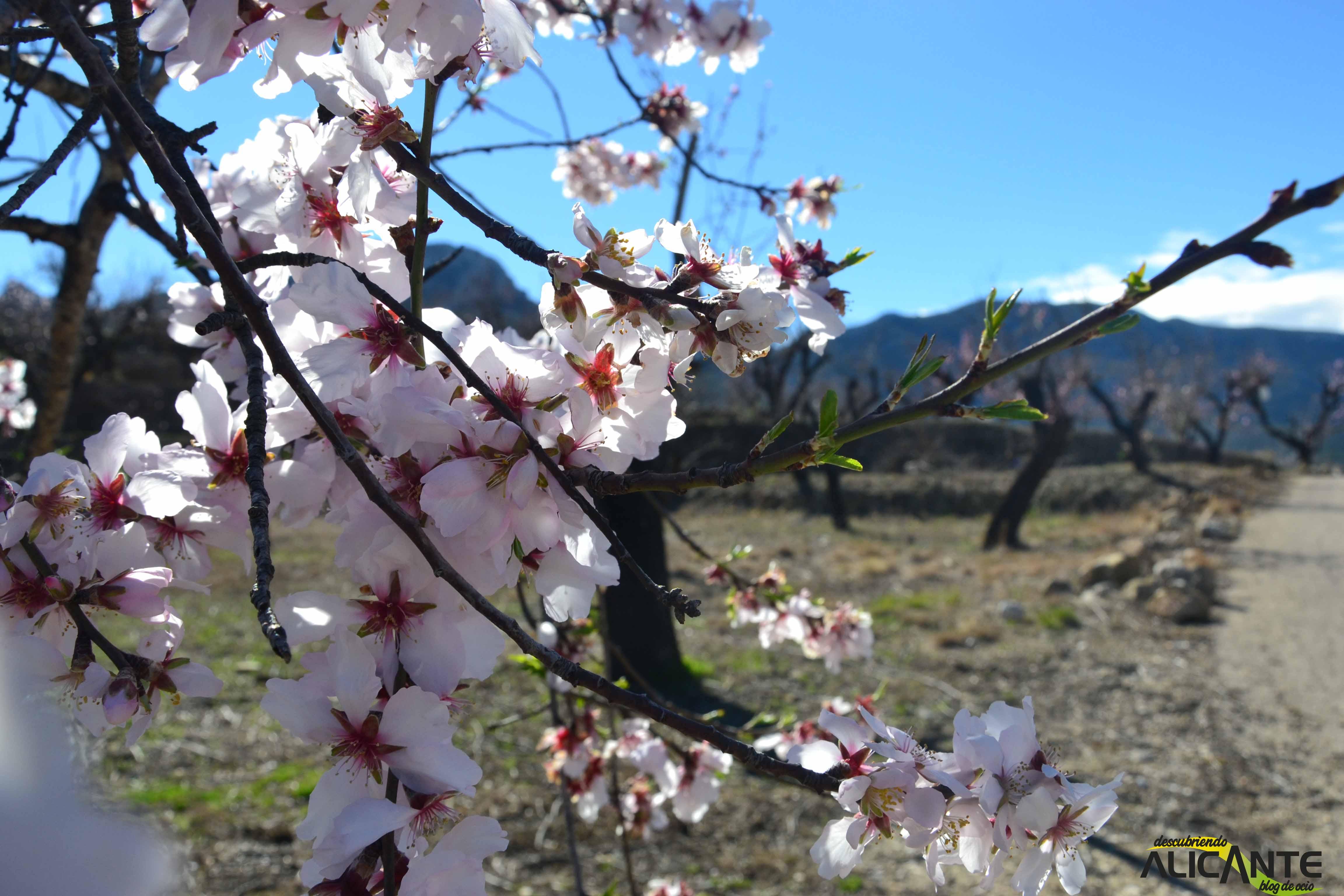 6-almendros-en-flor