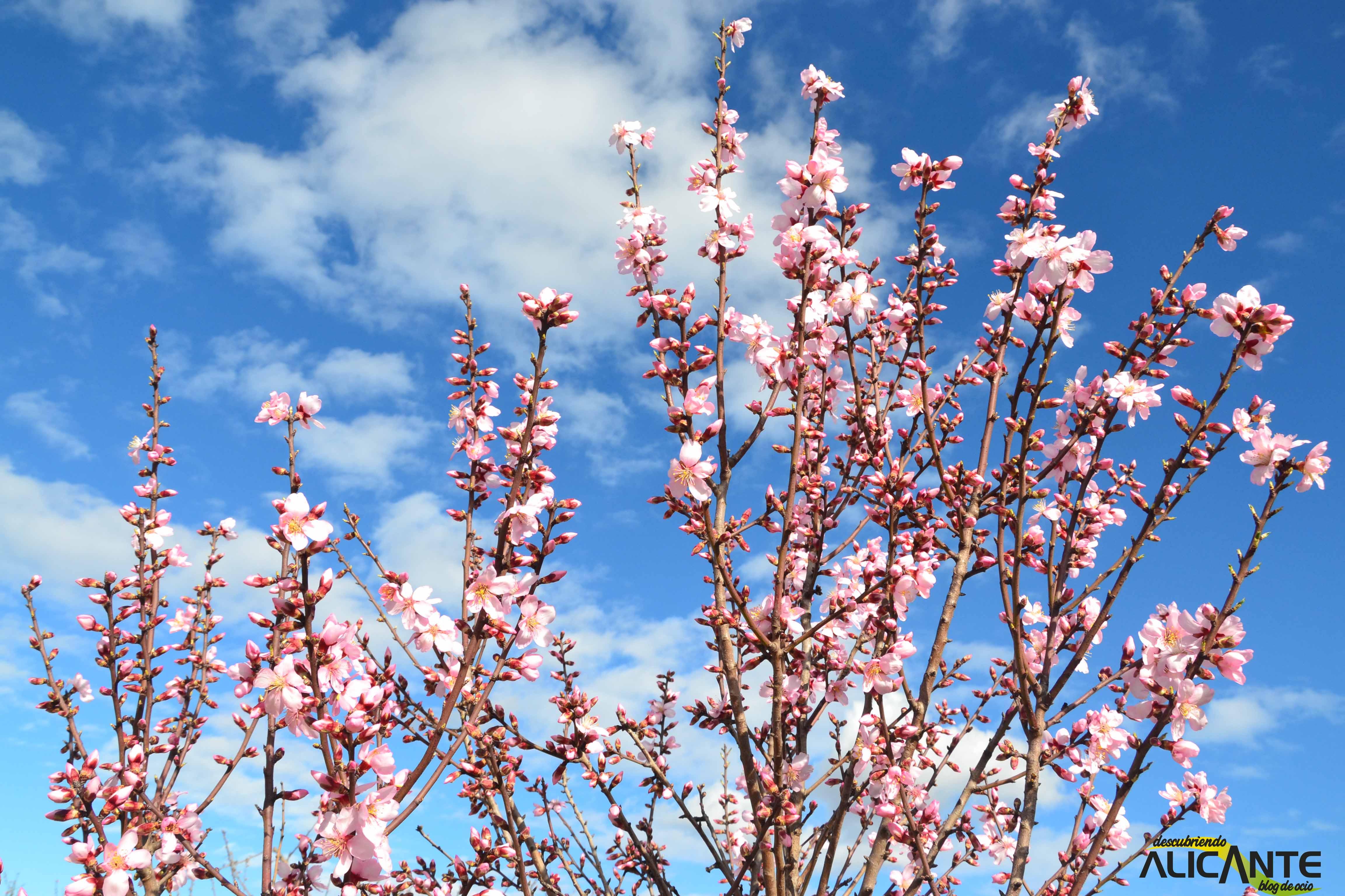 9 almendros-en-flor