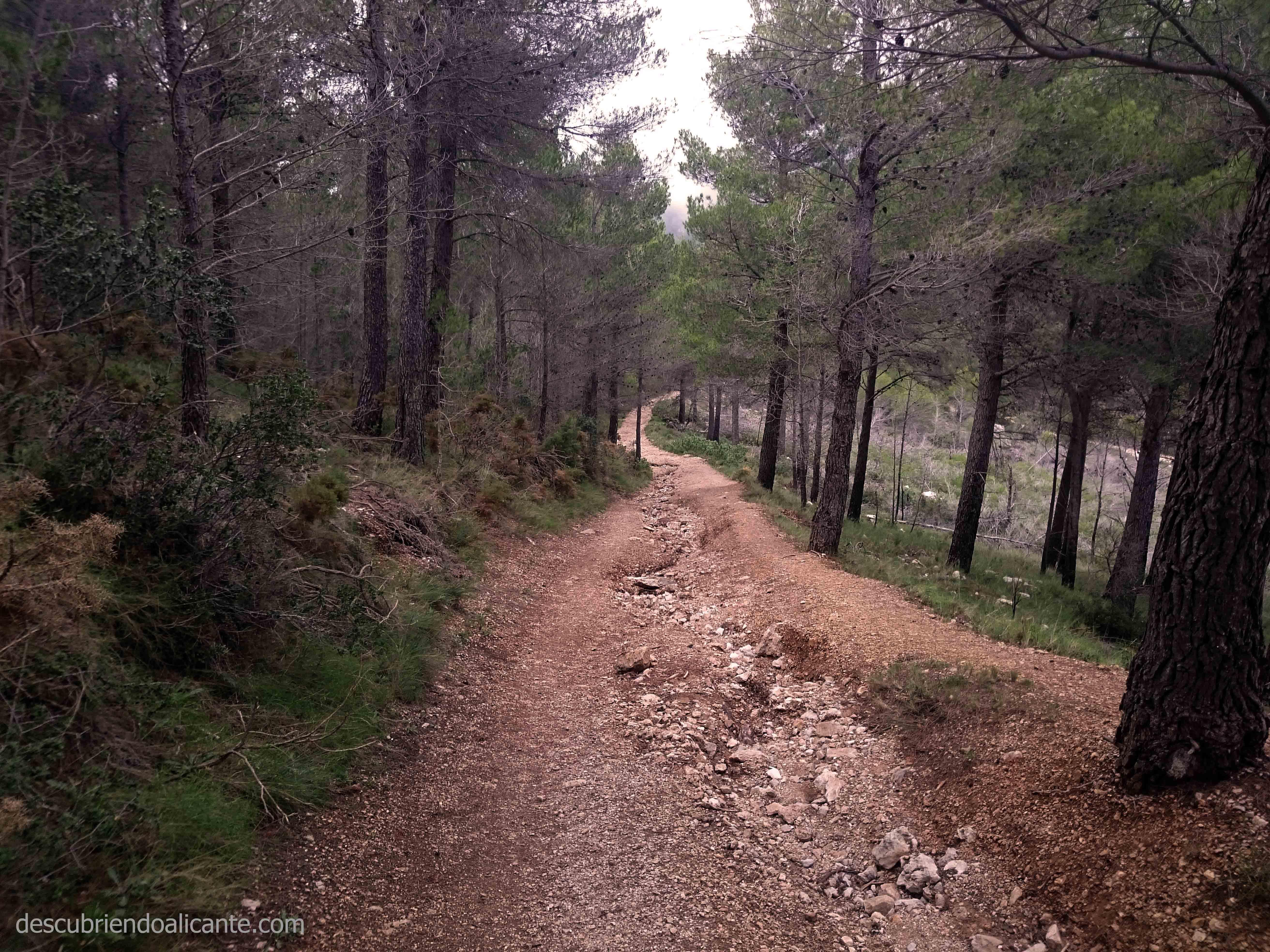 99-montana-bosque-alicante-puig-campana