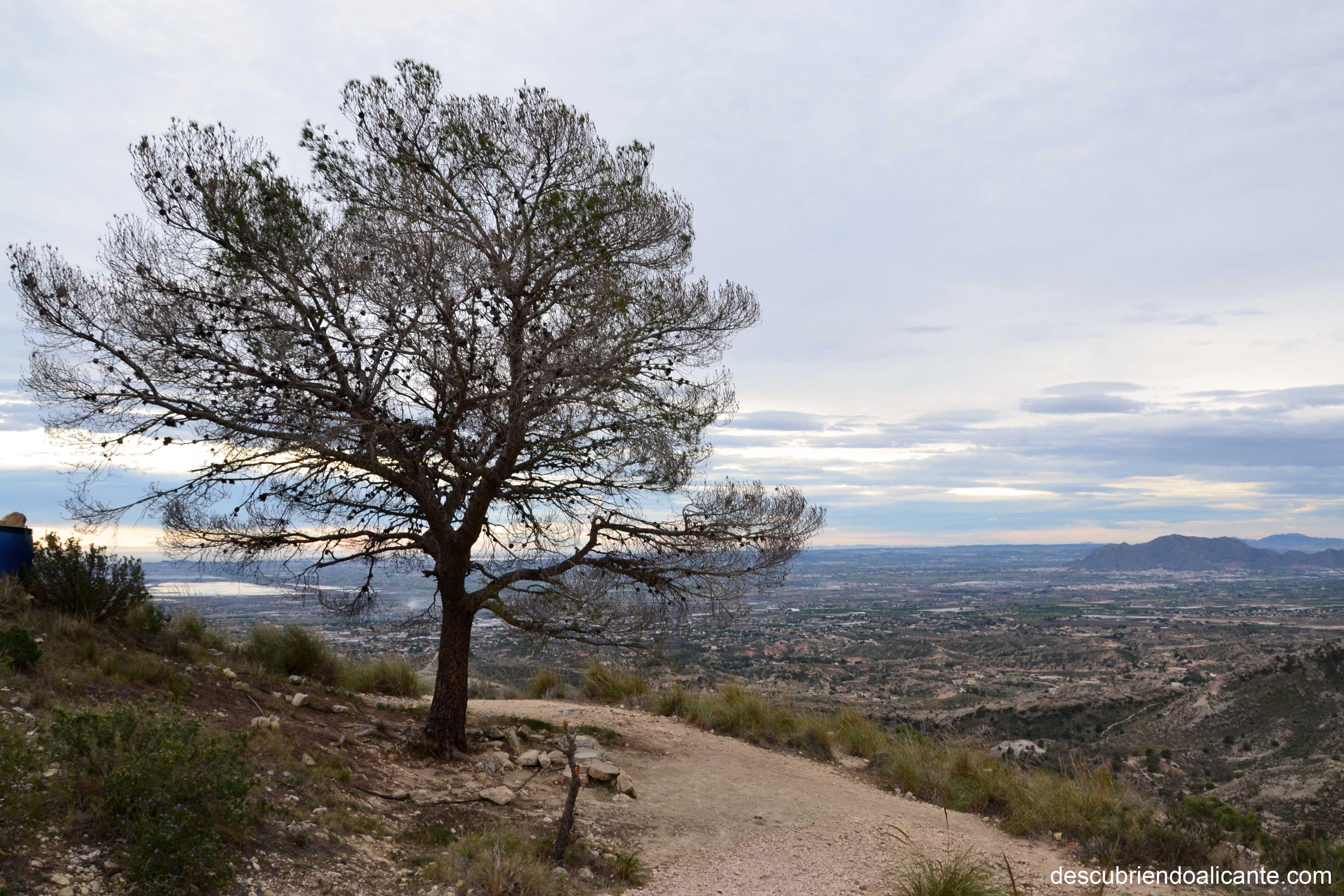 Pi de l alivi Sierra de Crevillente
