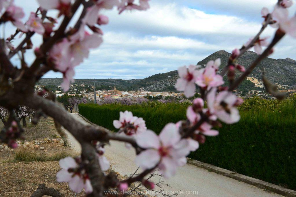 Alcalalí con almendros en flor