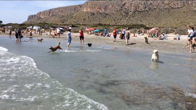 Playa Canina santa Pola